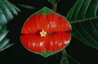 hookers-lips.jpg
