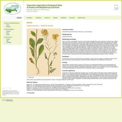 AgroAtlas - Weeds - Sinapis arvensis L. - Charlock mustard.