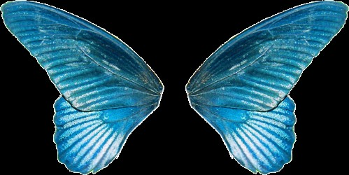 butterfly-wing-png-3.png