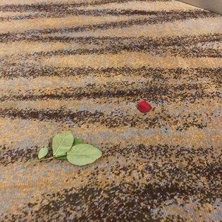 Deconstructed desert rose found at Hyatt Scottsdale #gardenconcept