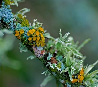 lichen-jim-mccolluch.jpg