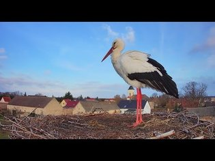 Storchennest Fohrde - Nest 1 - Live aus dem Nest (White Stork, Bocianie, лелека, čáp, roda, gólya)