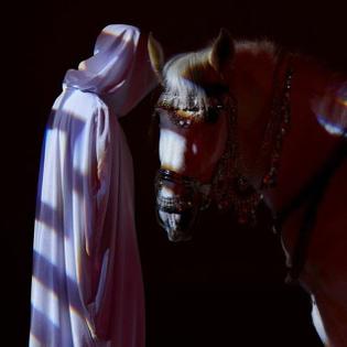 horse-down.jpg