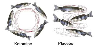 ketamine-fish.jpg