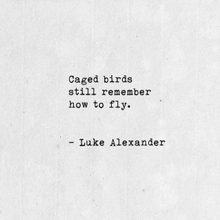 """love this poem """"Wild at Heart"""" by @lukealexanderpoetry 🖤"""