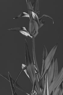 flowers-14.jpg?format=1000w