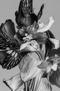 flowers-11.jpg?format=2500w
