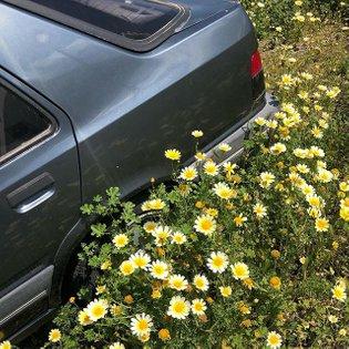Instagram post by deborah bloemen * Apr 17, 2019 at 8:09pm UTC