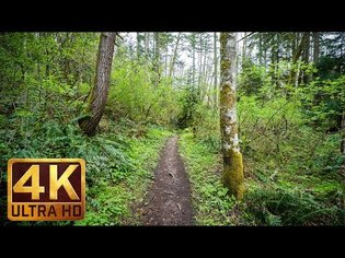 4K Virtual Hike | Nature Walk Through Forest with Peaceful Music - EPISODE 3