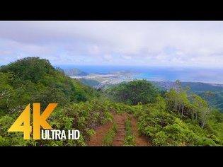 4K Virtual Walk - Walking in the Forest - Hawaiian Kuliouou Ridge Trail - 1.5 HRS