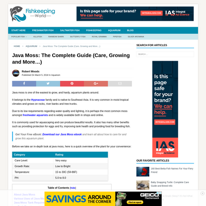 Java Moss: The Complete Guide (Care, Growing and More…)   Fishkeeping World