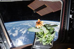 flower_in_space.jpg