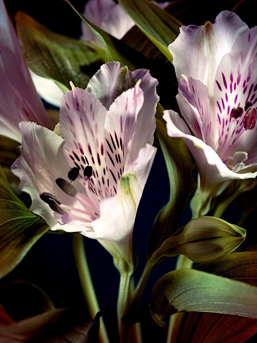 thomasdemonaco-flowers-delight-900x1200.jpg