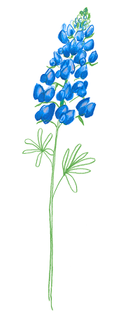 bluebonnets_1.jpg?format=500w