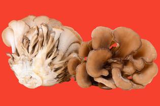 maitake-mushrooms-050418.jpg