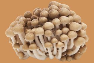 beech-mushrooms-050418.jpg