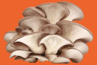 oyster-mushroom-050418.jpg