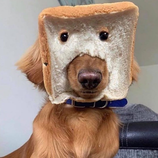 breadface.jpg