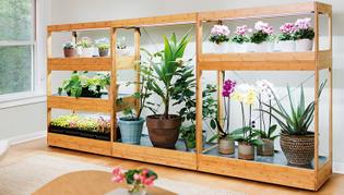5020-bamboo-light-garden.jpg