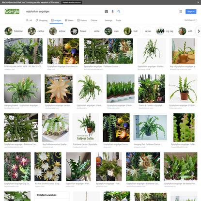 epiphyllum anguliger - Google Search