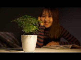 Cyborg Botany: Augmented plants as sensors, displays, and actuators