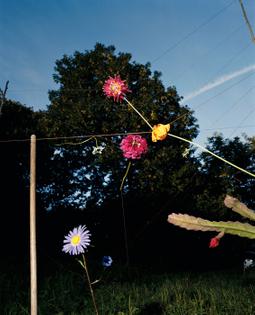 Collier Shorr, Arrangement #18 (Blumen), 2008.