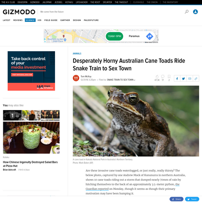 Desperately Horny Australian Cane Toads Ride Snake Train to Sex Town