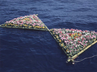 ocean-flowers.jpg