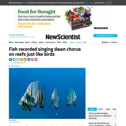Fish recorded singing dawn chorus on reefs just like birds