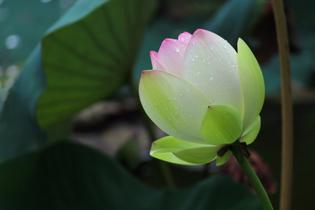 bloom-2081623.jpg