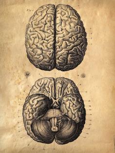 brain-vintage.jpg