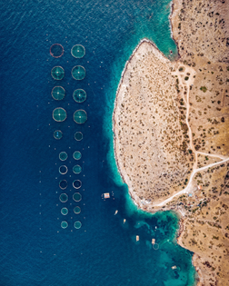 """""""A fish farming operation is seen here in the Saronic Gulf, just offshore Greece's Attica Peninsula. Fish farming — or pisciculture — involves raising fish in tanks or enclosures, usually for food. In 2015, Greece had at least 300 of these farms and raised more than 242 million pounds (109 million kg) of fish and mussels."""""""