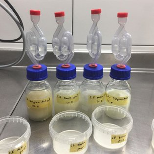 Enzymatically cleaved cow's milk to liberate fermentable glucose from unfermentable lactose thus allowing for alcoholic and ...