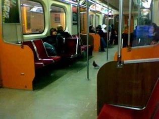 Pigeon Prefers the Subway