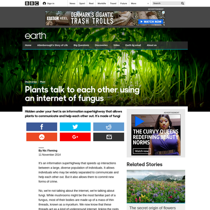 Plants talk to each other using an internet of fungus