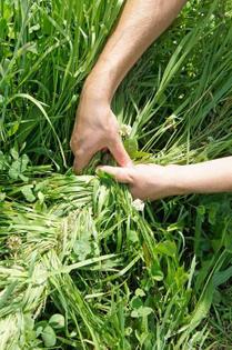 i braid the grass into my friend