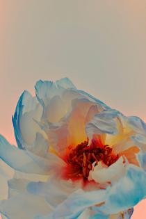 0000_071319_flowers8483.jpg