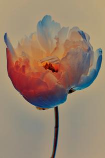 0000_071319_flowers8455.jpg