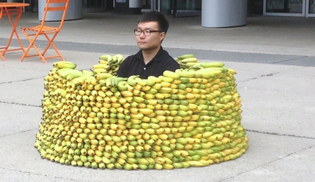 Artist traps himself inside banana barrier at Kitchener City Hall