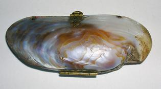 19th century Shell purse