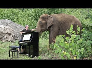 """Debussy """"Clair de Lune"""" on Piano for 80 Year Old Elephant"""