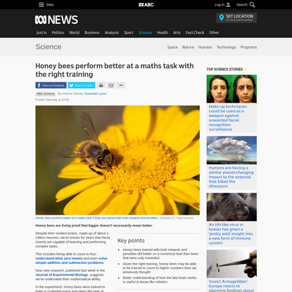 Honey bees perform better at a maths task with the right training - Science News - ABC News