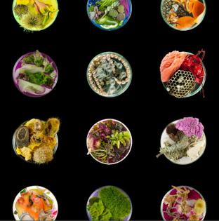 06-vanitas-in-a-petri-dish-grid-suzanne-anker.jpg