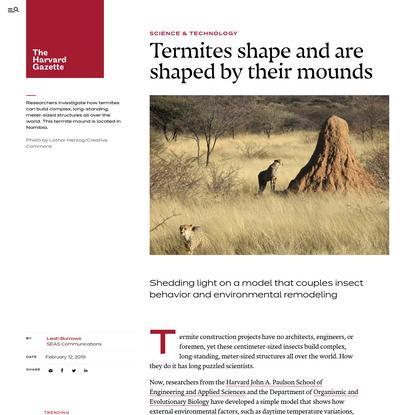 How do tiny termites make such massive mounds?
