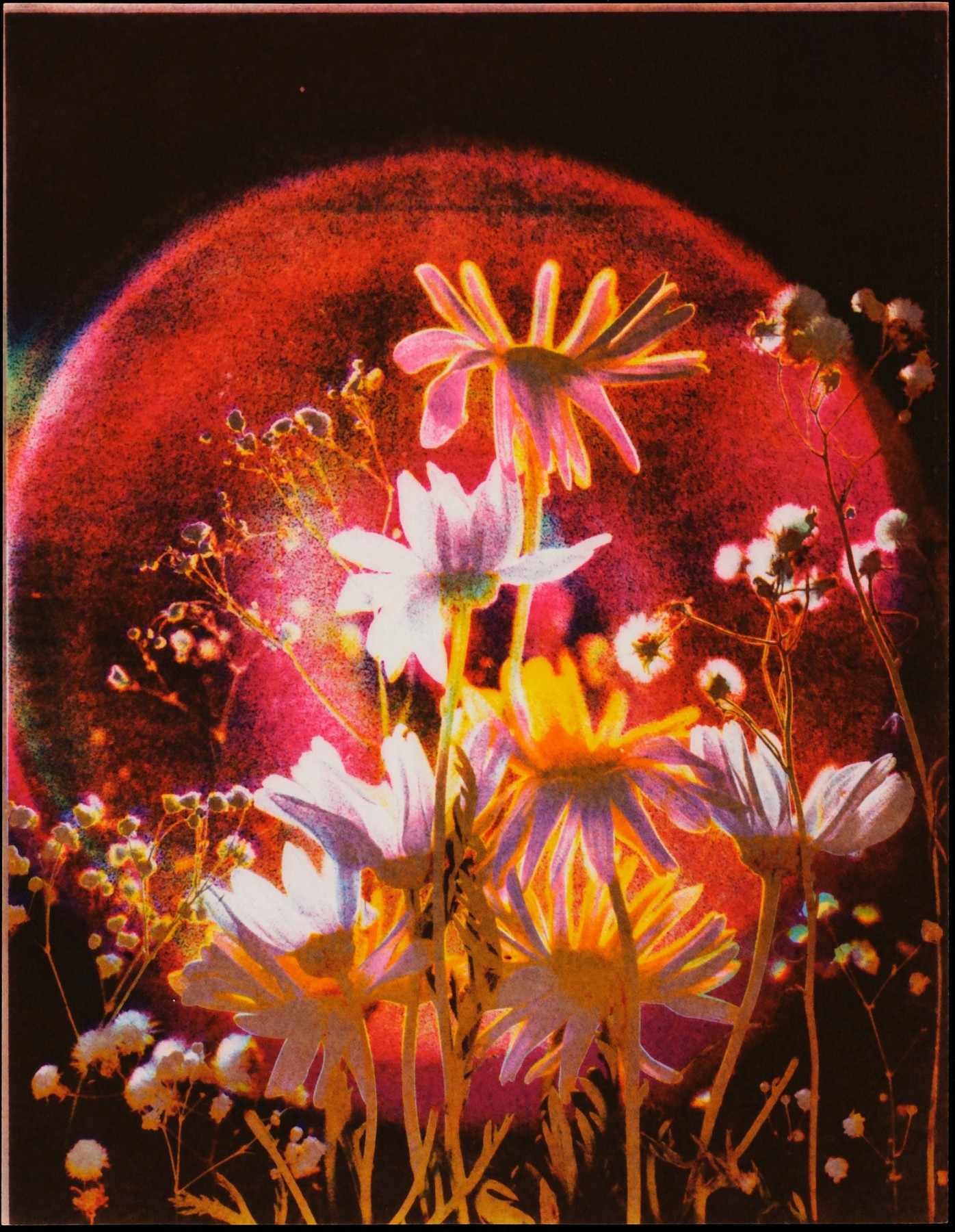 Sonia Landy Sheridan, Flowers #8, 1976, 3M Color-In-Color I on paper
