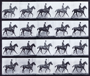 plate_598_horse_daisy_trotting_saddled_male_clothed_rider.jpg