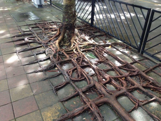 gridded roots