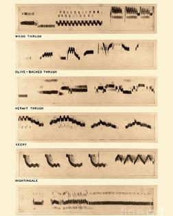 spectrogram-of-bird-songs-omikron.jpg