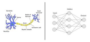neural_network_brain_mimic.jpeg