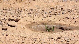 Black Mesa Water Coalition (BMWC)